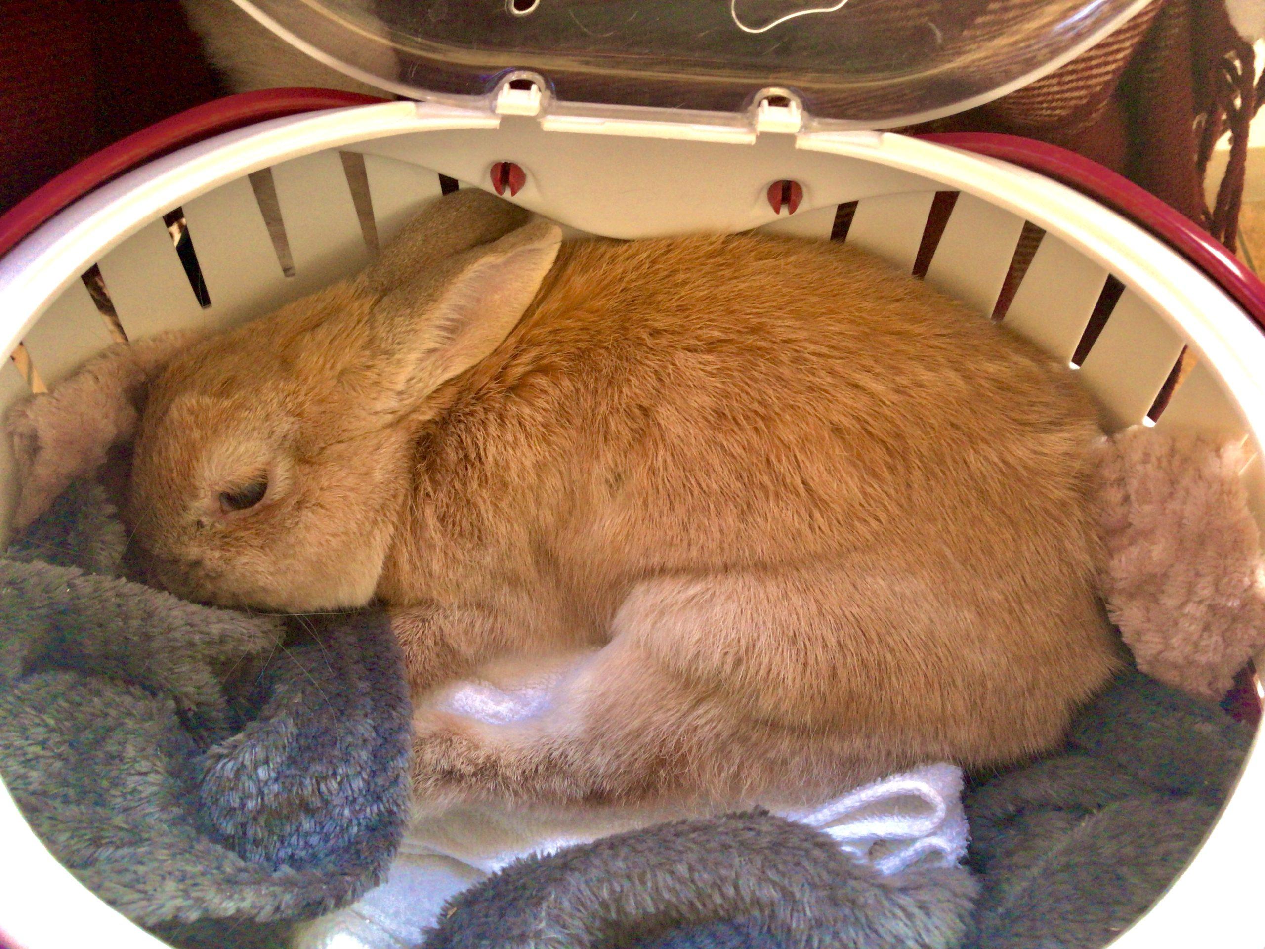 ウサギを運ぶキャリー